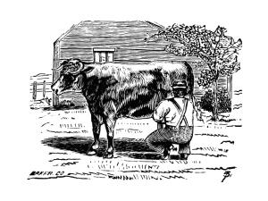 Dairy? (Image: man milking cow. Public domain, British Library collection.)