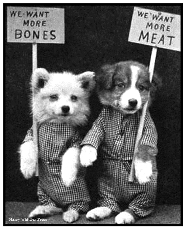 "Harry Whittier Frees -- ""We Want More Bones, We Want More Meat"""