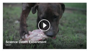 Science Death Experiment, a video from Dr. Tom Lonsdale